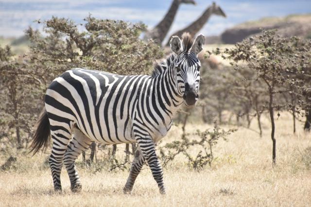 タンザニア「ビザ申請 大使館」必要書類、費用,注意点,予防接種